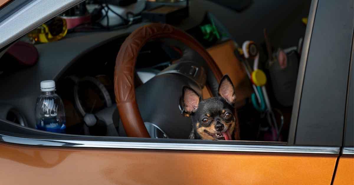 Älä jätä kaveria autoon läkähtymään!