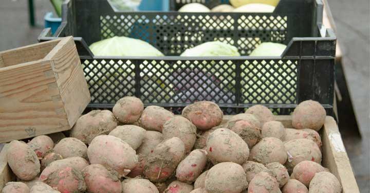 Sadonkorjuumarkkinat – hyvää läheltä Kolin luomutila