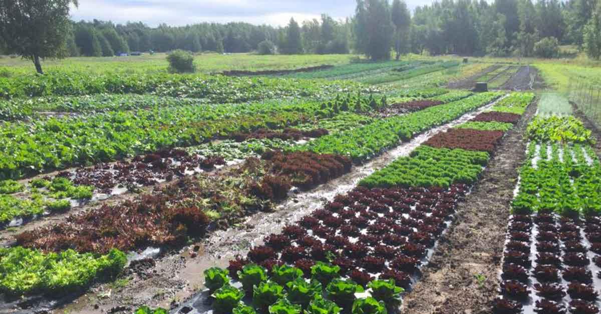 blogi: Kestävän gastronomian karttapalvelu Kega.fi helpottaa makumatkailua
