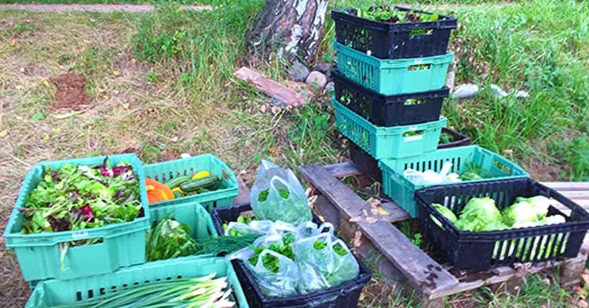 blogi: Innovaatiorahalla ruoka lähemmäs